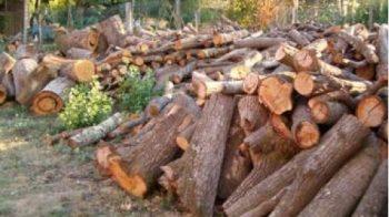 Vietato fare legna