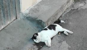Fucilate Al Gatto Randagio Lasciato In Fin Di Vita Per Strada