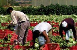 Nei campi faceva lavorare extracomunitari senza permesso ...