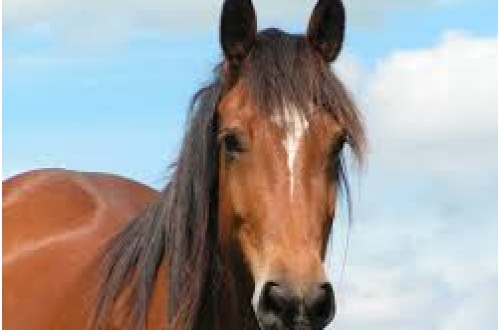cavallo in autostrada