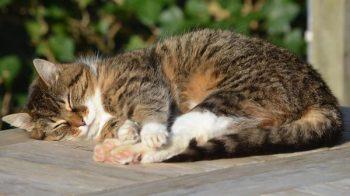 gatto avvelenato
