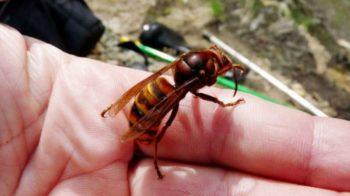 puntura di insetto