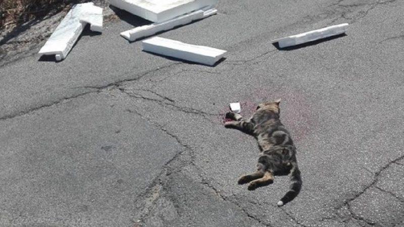fucilate al gatto