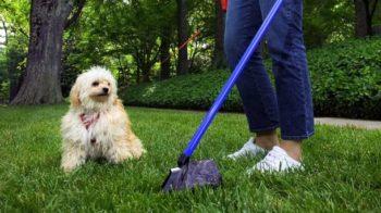 Serravalle multe da 500 euro a chi non pulisce i bisognini del cane