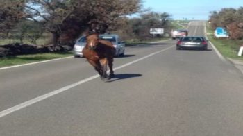 cavalli in autostrada