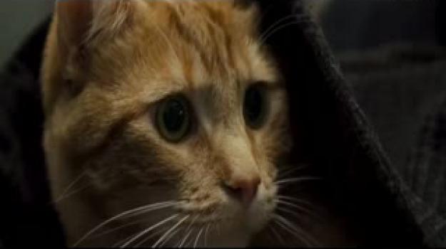 gatto incastrato