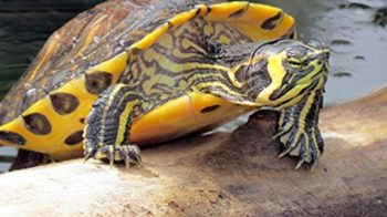 tartarughe abbandonate