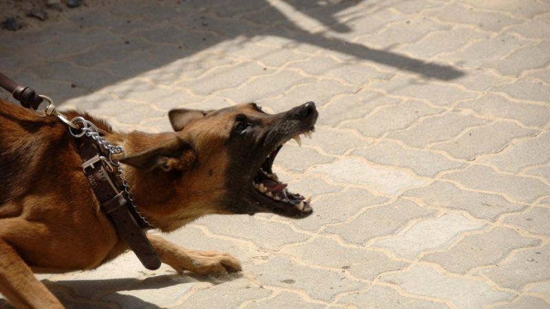 morso dal cane