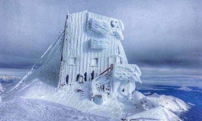 freddo record