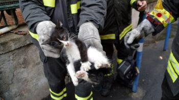 gatto chiuso