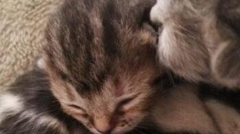 gattini nel cassonetto