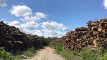 Serravalle ripulisce la pista ciclabile da quintali di detriti